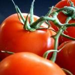 tomatoes-209772_640